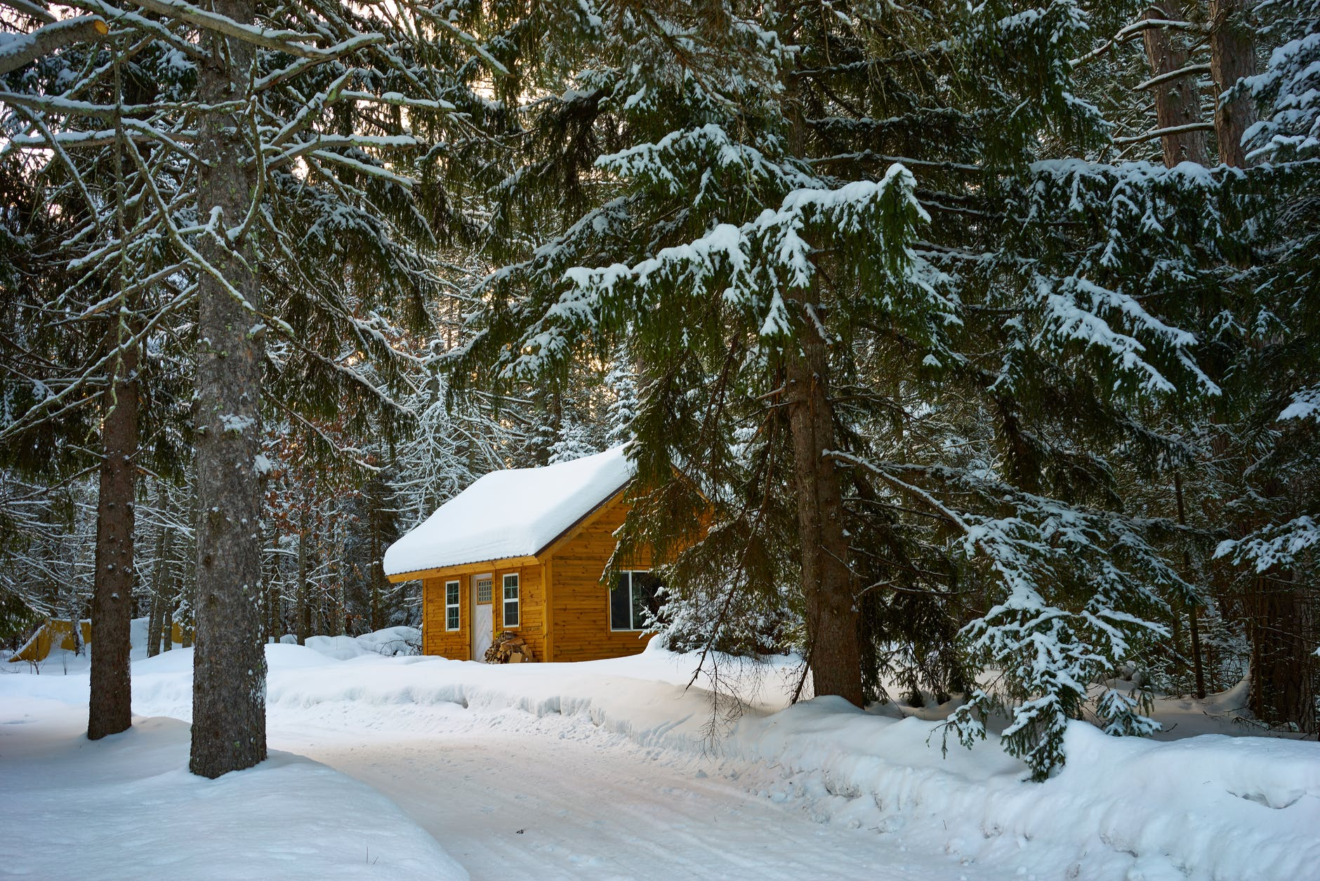 brown house near pine trees covered with snow